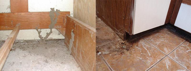 Cách sửa chữa tủ bếp bị mối mọt