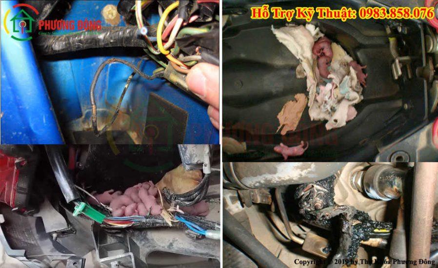 Cách sửa xe máy bị mất điện do chuột cắn